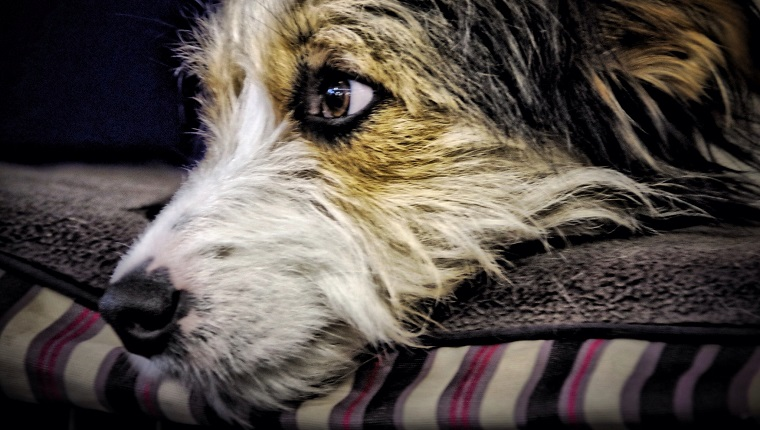 majority of dogs are affected by cancer