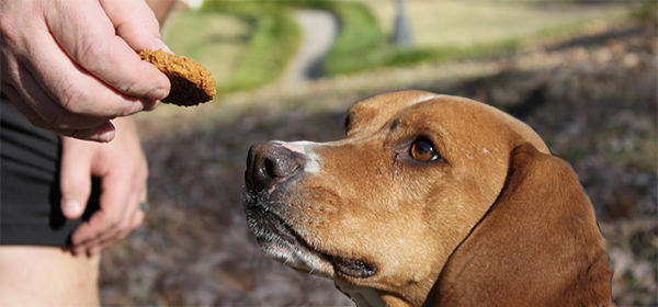 Dog Treats to Humour the Favored Pooch